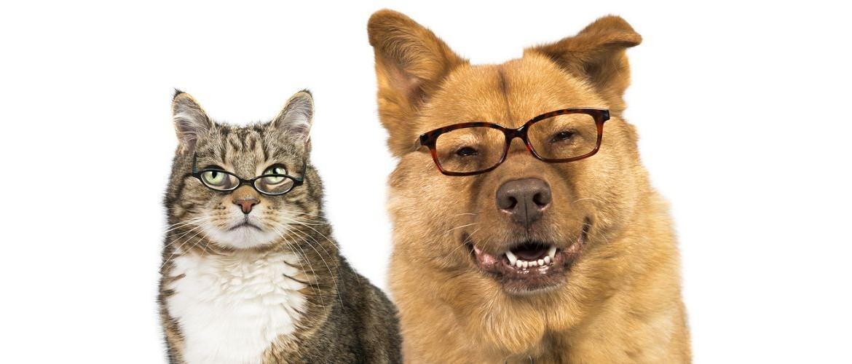 cane_e_gatto_con_occhiali