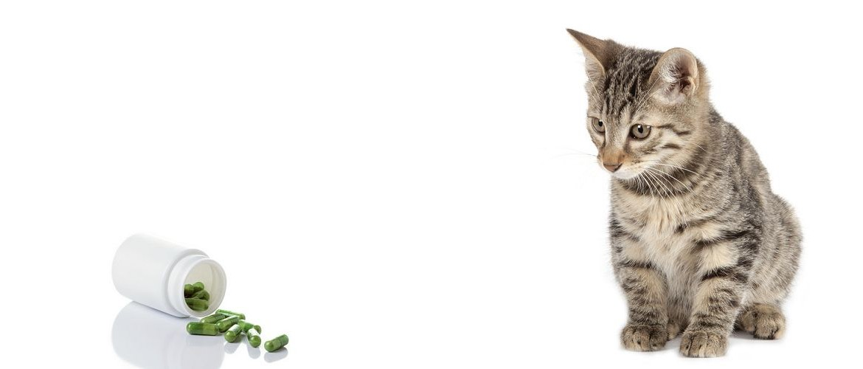 gatto_con_medicine